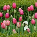 Friday Flowers – NY Botanical Children's Garden