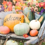 Four Fall Faves – The Buzz by Diane James Home