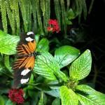 Tuesday Treat – Butterflies