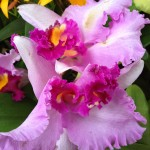 Escape to the NY Botanical Garden Orchid Show
