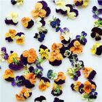 Friday Flowers – Edible Flowers