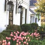 Tulips, Linens & Art