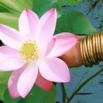 BudhaGirl – Mindful Glamour