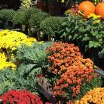 Fall Inspiration – Outdoor Decor