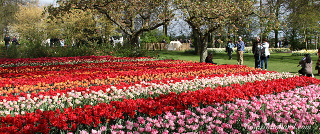 best-time-to-visit-keukenhof