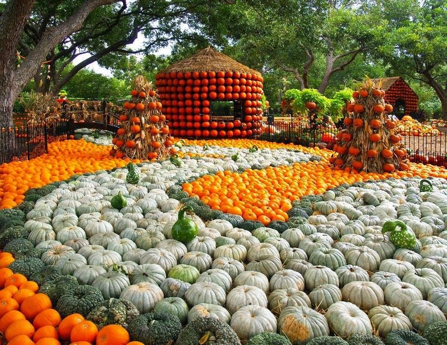 65,000-pumpkins-Dallas-Arboretum